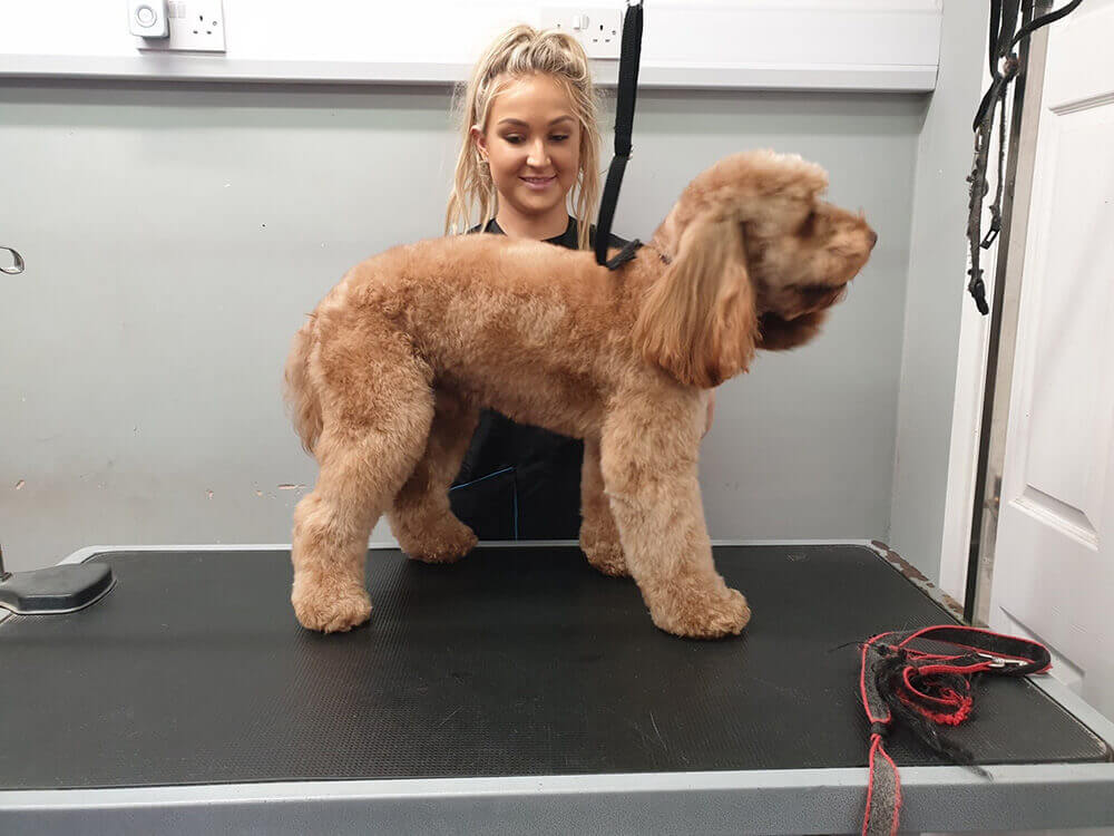 Snoots Dog Grooming Training centre